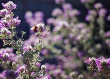 紫色春天 库存图片