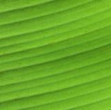 绿色春天 库存图片