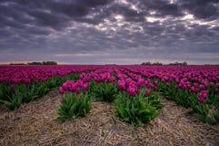 紫色晚上 库存照片