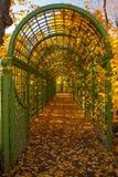 绿色曲拱在秋天公园 免版税库存图片