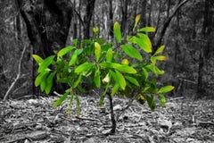 绿色有叶的小树 库存照片