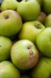 绿色有机苹果英国英国 免版税库存照片