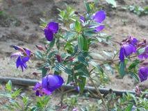 紫色朋友 免版税图库摄影