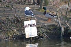 在没有渔标志的鸥 库存图片