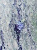 紫色木头 库存照片