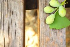 绿色未加工的银杏树和叶子在一张木桌上 库存图片