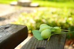 绿色未加工的银杏树和叶子在一张木桌上 免版税库存图片