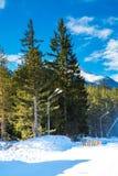 绿色杉树和白色雪峰顶  免版税库存图片