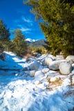 绿色杉树和白色雪峰顶  免版税图库摄影