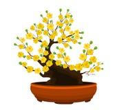 黄色杏子花,传统月球新年在越南 图库摄影