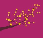 黄色杏子花,传统月球新年在越南 免版税库存照片
