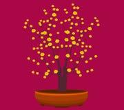 黄色杏子花,传统月球新年在越南 库存图片