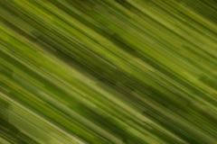 绿色条纹迷离 免版税库存照片