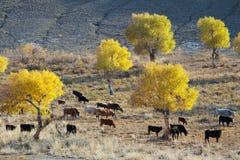 黄色杨属euphratica和动物在沙漠附近 免版税库存图片