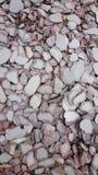 紫色板岩盖了花圃 库存照片