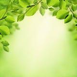 绿色板簧和夏天背景 免版税库存照片