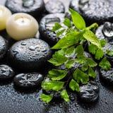 绿色枝杈蕨,竹子,冰美丽的温泉静物画和能 免版税库存图片