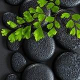 绿色枝杈铁线蕨属蕨的美好的温泉概念在禅宗玄武岩的 图库摄影