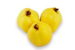 黄色柑橘 图库摄影