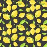 绿色柠檬结果实与在分支深黑色的叶子 免版税库存图片