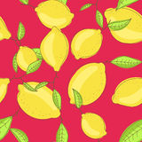 绿色柠檬结果实与在分支红色明亮的叶子 免版税库存照片