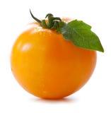 黄色柿子蕃茄 免版税图库摄影