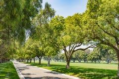 绿色树公园车道 免版税图库摄影