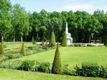 绿色树和喷泉在petergof公园  图库摄影