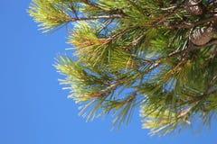 绿色树和天空 库存图片