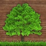 绿色树和新鲜的草在木背景 图库摄影