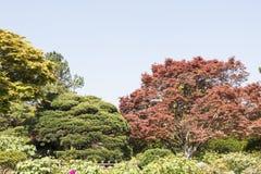 绿色树和枫叶 免版税库存照片