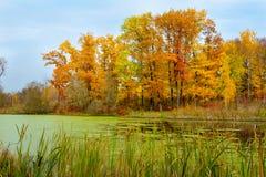 黄色树和池塘秋天风景  免版税库存图片