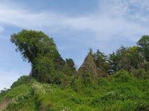 绿色树和灌木反对蓝天 免版税库存照片