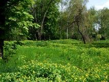 绿色树和草在庭院里 库存照片