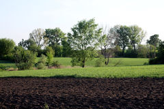 绿色树和黑地球 免版税库存照片