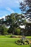 绿色树在公园和床与花 免版税库存照片