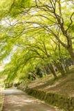 绿色树在公园 免版税库存照片