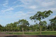 绿色树在公园 库存图片