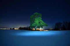 绿色树在冬天夜 免版税库存照片