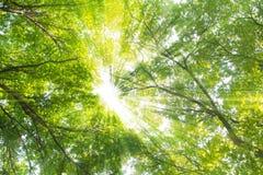 绿色树在夏天 库存图片