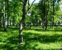 绿色树在森林和公园里 免版税库存图片