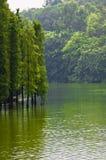 绿色树在湖增长 图库摄影