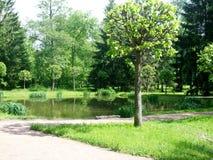 绿色树在湖附近的公园 免版税库存图片
