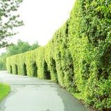 绿色树在自然公园 库存照片