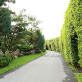 绿色树在自然公园 免版税库存照片