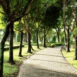 绿色树在自然公园 免版税图库摄影