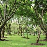 绿色树在自然公园 库存图片