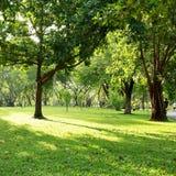 绿色树在自然公园 免版税库存图片