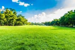 绿色树在蓝天的美丽的公园 免版税图库摄影