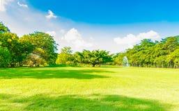 绿色树在蓝天的美丽的公园 免版税库存照片